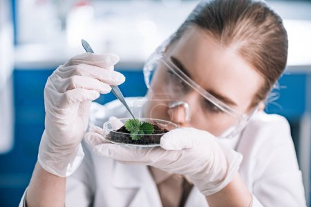 attractive biochemist in goggles holding tweezers near green plant