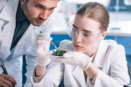 Photo for Biochemist in goggles holding tweezers near green plant and coworker - Royalty Free Image