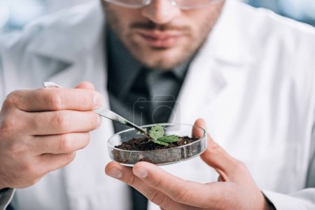 Photo for Cropped view of biochemist holding glass sample with ground and small plant - Royalty Free Image