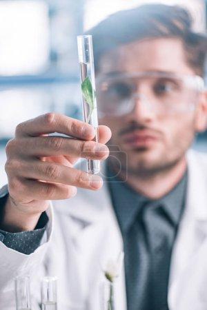 Photo pour Focus sélectif d'un beau biochimiste en lunettes tenant une éprouvette en verre avec une plante verte - image libre de droit