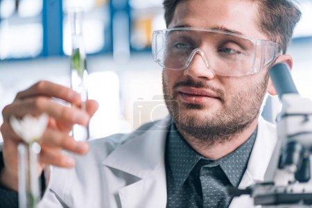 Photo pour Focus sélectif d'un beau biochimiste regardant un tube à essai avec une plante verte - image libre de droit