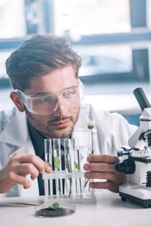 Photo for Selective focus of bearded biochemist looking a test tubes with green plants near microscope - Royalty Free Image