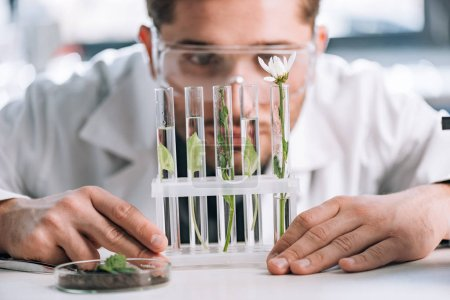 Photo for Selective focus of bearded biochemist looking a test tubes with small plants near microscope - Royalty Free Image