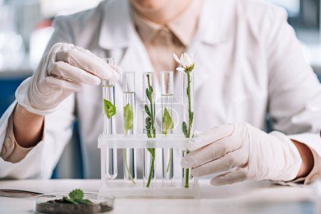 Photo for Cropped view of biochemist in latex gloves touching test tube with small plant - Royalty Free Image