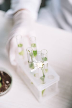 Photo for Cropped view of biochemist in latex glove near flower and plants in test tubes - Royalty Free Image