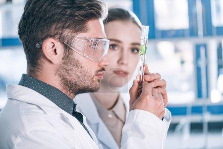 Photo pour Foyer sélectif de beau scientifique dans les lunettes regardant le tube à essai avec l'usine près de beau collègue - image libre de droit