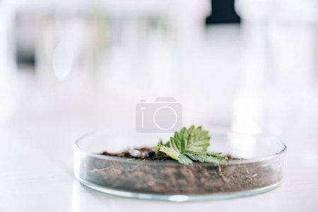 Photo for Selective focus of ground with green small plant  in laboratory - Royalty Free Image