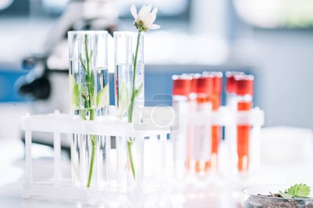 Photo for Selective focus of green leaves and flower in test tubes near samples in laboratory - Royalty Free Image