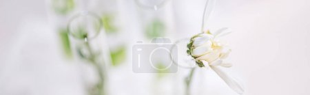 Photo for Panoramic shot of blooming flower in test tube in laboratory - Royalty Free Image
