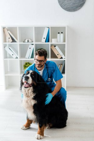 Photo pour Young, attentive veterinarian touching cute bernese mountain dog sitting on floor - image libre de droit