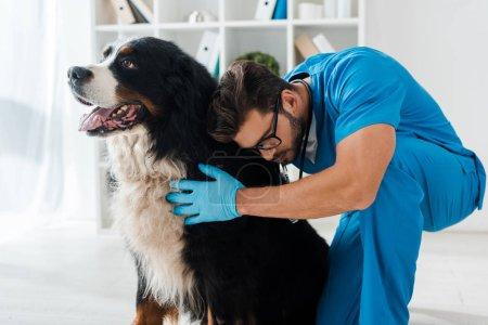 Photo pour Young, attentive veterinarian examining cute bernese mountain dog - image libre de droit