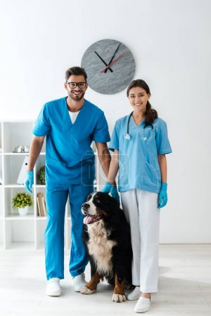 Photo pour Two smiling veterinarians looking at camera while standing near cute bernese mountain dog - image libre de droit