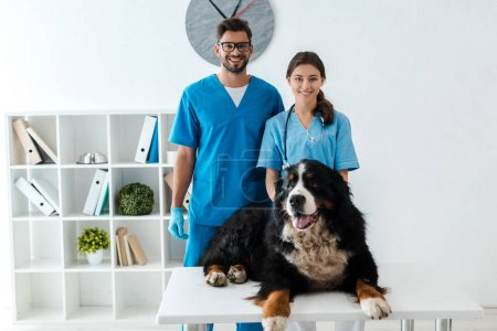 Photo for Two smiling veterinarians looking at camera while standing near bernese mountain dog lying on table - Royalty Free Image