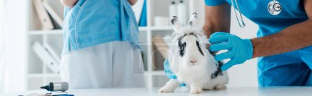 Photo for Cropped view of veterinarian examining cute spotted rabbit near colleague - Royalty Free Image