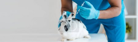 Photo for Cropped view of veterinarian making vaccination of cute spotted rabbit, panoramic shot - Royalty Free Image