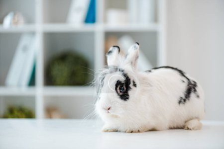 adorable, fluffy, spotted rabbit on table in veterinary clinic