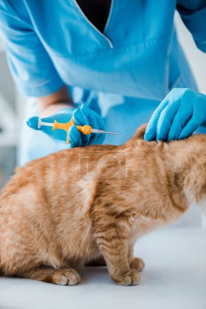 Photo pour Cropped view of veterinarian holding pet microchip syringe near red cat - image libre de droit