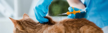 cropped view of veterinarian holding pet microchip syringe near red cat, panoramic shot