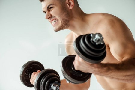 Photo for Tense muscular bodybuilder with bare torso working out with dumbbells isolated on grey - Royalty Free Image