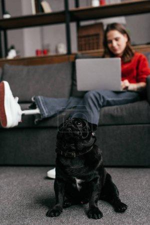 Photo pour Mise au point sélective d'un chiot assis par la femme avec une jambe prothétique et un ordinateur portable sur un canapé - image libre de droit