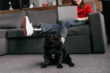 Photo for Selective focus of funny pug sitting by girl with prosthetic leg and laptop in living room, cropped view - Royalty Free Image