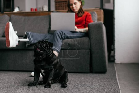 Photo pour Selective focus of funny pug dog sitting by girl with prosthetic leg and laptop in living room - image libre de droit