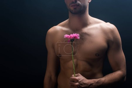 Photo for Cropped view of muscular shirtless man holding gerbera isolated on black - Royalty Free Image