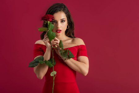 Photo for Sexy, confident girl looking at camera while holding red rose isolated on red - Royalty Free Image