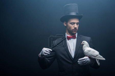 Photo pour Jeune magicien en chapeau montrant tour avec colombe et baguette dans la chambre noire avec de la fumée - image libre de droit