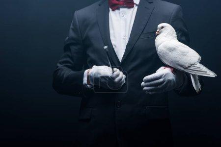 Photo pour Vue recadrée du magicien tenant colombe et baguette isolée sur noir - image libre de droit