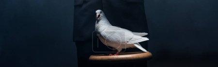 Photo pour Photo panoramique d'un magicien montrant un truc avec une colombe dans une pièce sombre avec de la fumée - image libre de droit