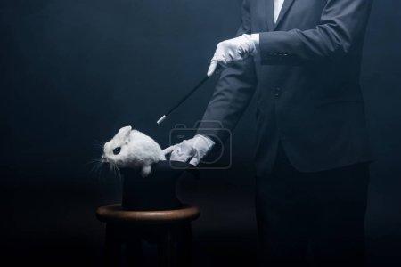 Photo pour Vue recadrée du magicien montrant tour avec baguette et lapin blanc dans le chapeau, dans la pièce sombre avec fumée - image libre de droit