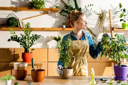 Photo for Beautiful woman in apron looking at green plants - Royalty Free Image