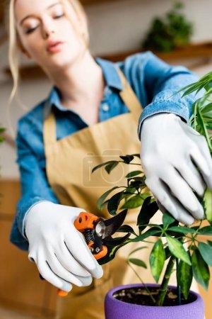 Photo pour Focalisation sélective de la femme dans les gants tenant les ciseaux de jardinage près des feuilles vertes - image libre de droit