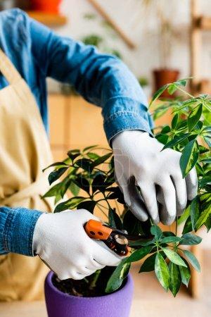 Photo pour Vue recadrée de la jeune femme en gants coupant les feuilles vertes avec des ciseaux de jardinage - image libre de droit