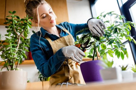 Photo pour Focalisation sélective des jeunes femmes en gants coupe des feuilles avec des ciseaux de jardinage - image libre de droit