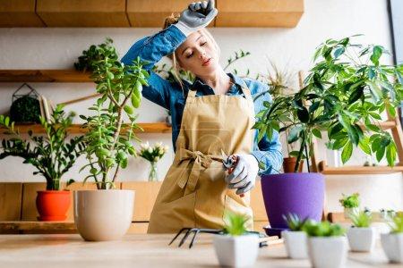 Photo pour Focalisation sélective de jeunes femmes fatiguées dans des gants touchant le front tout en tenant des ciseaux de jardinage près des plantes - image libre de droit