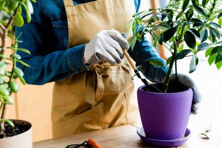 Photo pour Vue recadrée d'une jeune femme en gants tenant un râteau près d'une plante dans un pot de fleurs - image libre de droit