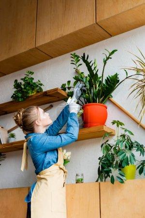 Photo pour Jeune belle femme en gants regardant les plantes - image libre de droit