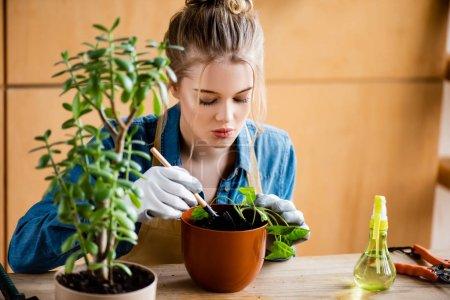 Photo pour Focus sélectif de jolie femme en gants tenant une petite pelle pendant la transplantation de plante en pot de fleurs - image libre de droit