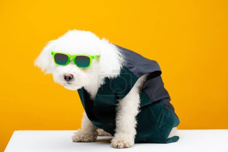 Photo for Cute bichon havanese dog in waistcoat and sunglasses on white surface isolated on yellow - Royalty Free Image
