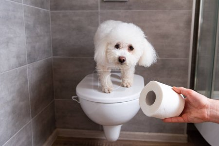 Cropped view of man holding toilet paper near havanese dog on toilet in restroom