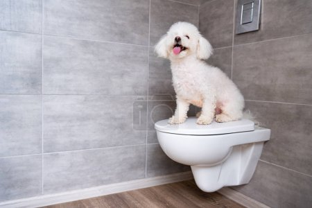 Photo for Cute bichon havanese dog sitting on closed toilet in bathroom - Royalty Free Image