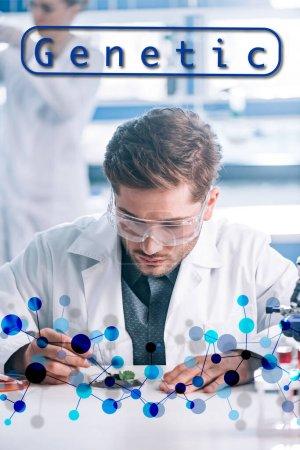 Photo pour Focus sélectif d'un beau biochimiste en lunettes tenant des pinces près de plantes vertes, illustration génétique - image libre de droit