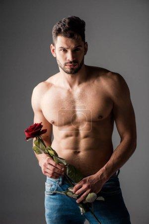 Photo pour Sexy homme torse nu en jeans tenant rose fleur sur gris - image libre de droit