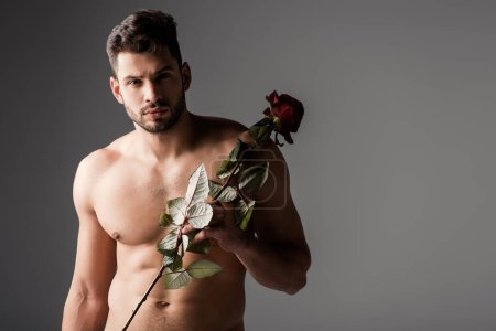 Photo for Sexy naked man holding rose flower on grey - Royalty Free Image