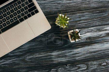 Photo pour Vue de dessus de l'ordinateur portable et des plantes de maison sur la surface en bois sombre - image libre de droit