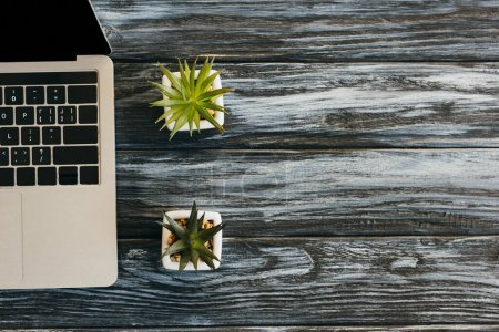 Photo for Top view of laptop and house plants on dark wooden surface - Royalty Free Image