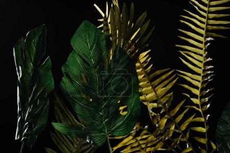 Photo pour Monstera et fougère feuilles vertes isolées sur noir - image libre de droit