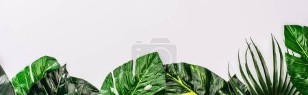 Photo for Panoramic shot of top view of leaves of tropical plants on white surface - Royalty Free Image